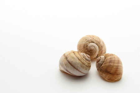three shells facing each other