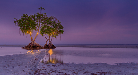 The two Mangrove trees in Palawan during Purple sunset
