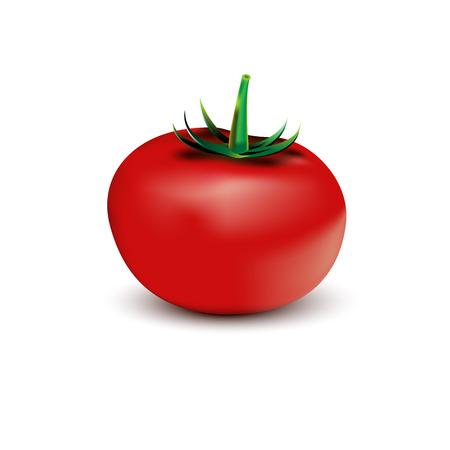 Tomate Ilustrace