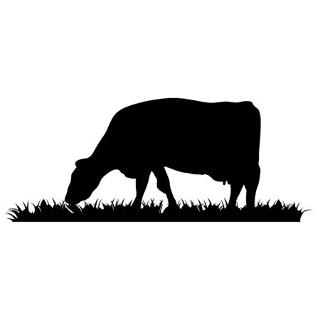 Cow on white Vector