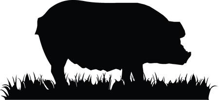 jabali: Ilustración del vector. Icono de cerdo aislado en el fondo blanco. Vectores
