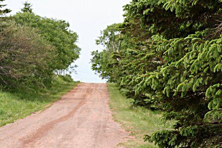 Een onverharde weg die leds tussen de bomen