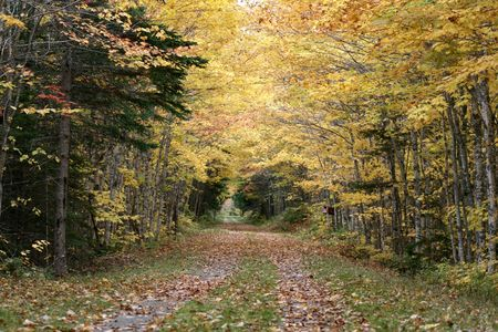 autumn colour: A county path alive with fall colours Stock Photo