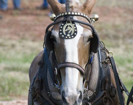blinders: Horse Stock Photo