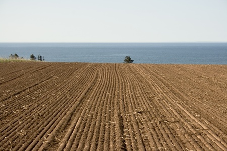 Cultivated Field photo