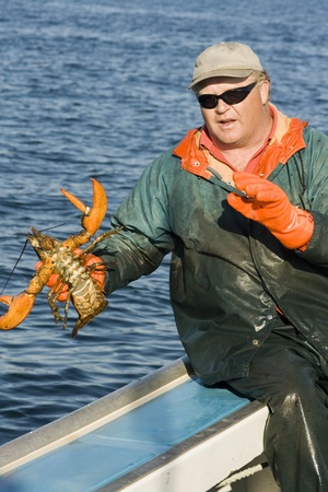 Fisherman and a live lobster photo