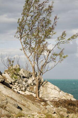 Tree clings to Rocks Stock Photo