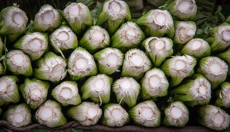 celery 版權商用圖片