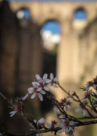 ronda: wildflowers in Ronda