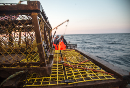 commercial fisheries: lobster traps