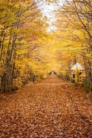 fall foliage Фото со стока