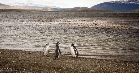 tierra del fuego: penguins Tierra del Fuego Stock Photo