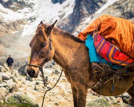 pack donkey peru