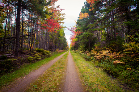 walking trail in Prince Edward Island 스톡 콘텐츠
