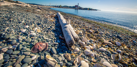 Log on a beach in Victoria British Colombia