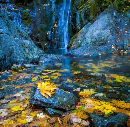 fallen leaf at a waterfall