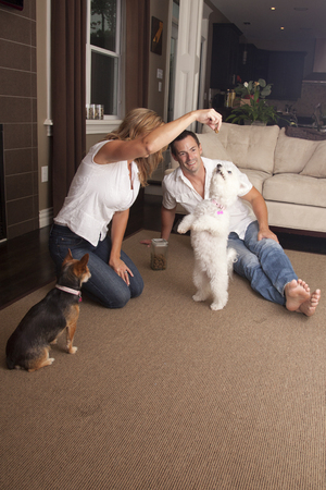 Couple at home teaching dog trick, to stand on hind legs. Stock Photo