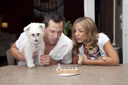 special occasions: birthday cake for pet dogs