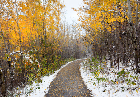 divergence: a paved pathway with yellow autumn trees and fresh snowfall