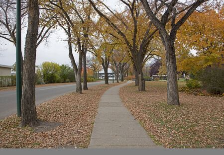a sidewalk surrounded by autumn trees and fallen leaves