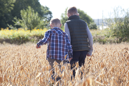 Two boys walk through an agricultural field of soy beans, hand in hand in the autumn sun