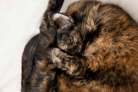 Cute little cat curled up wanting to be left alone to sleep and hide Stock Photo - 113086344