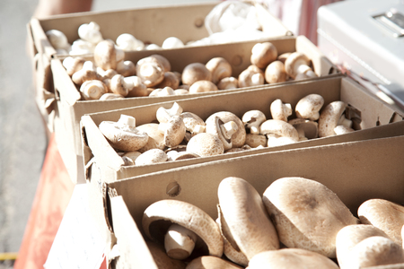Brown mushrooms in boxes at a market ready to be bought Reklamní fotografie