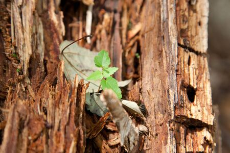 A small green plant grows inside the bark of an old tree outside with copy space