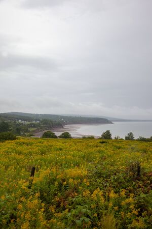 summertime view across yellow flora on the bay of fundy in nova scotia with tide
