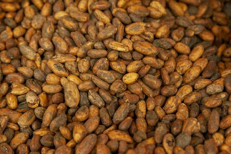 group of brown and yellow raw cacao beans