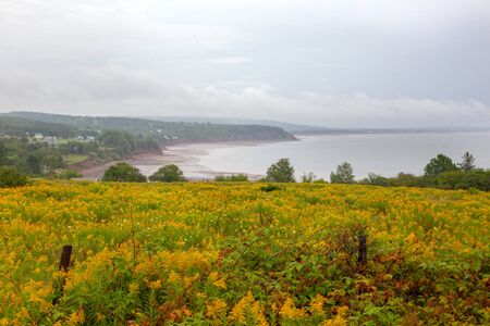 yellow flowers overlooking the bay of fundy in the economy area of nova scotia