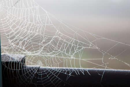 A beautiful cobweb or spider's web against the dewy morning mist outside Zdjęcie Seryjne