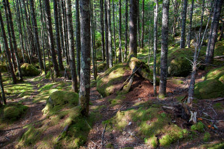 A beautiful empty wooded forest with green fresh moss and beautiful trees