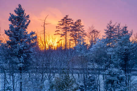 Sun setting over a highway with snow on the trees and a pink sky Zdjęcie Seryjne