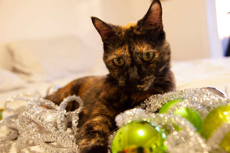 amongst green and silver holiday ornaments, a black and orange cat sits calmly