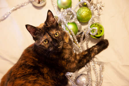 pretty kitty caught playing among holiday ornaments and silver strings