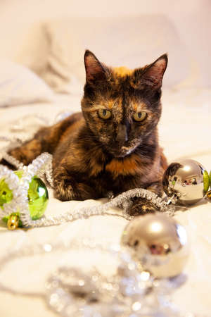 A beautiful black cat strewn with silver tinsel and green sparkly christmas balls