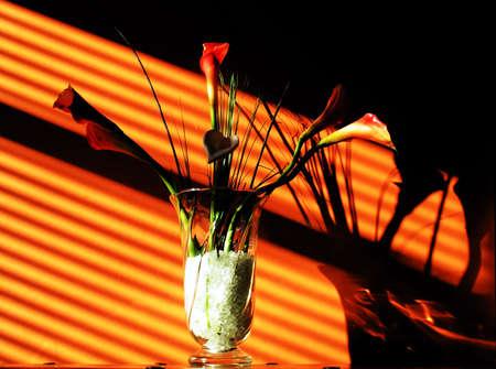 flowers in low sunlight photo