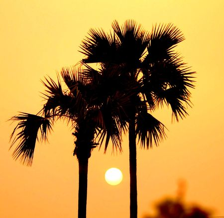 Sunset between palm trees, Bagan Archaeological Zone, Myanmar (Burma) photo