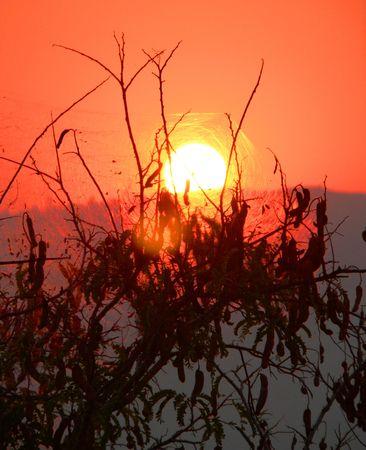 over the hill: Puesta de sol sobre la colina, detr�s de una telara�a.  Foto de archivo