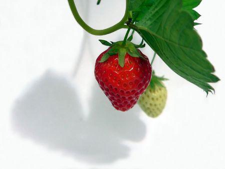 rich flavor: Strawberry & Shadow Stock Photo