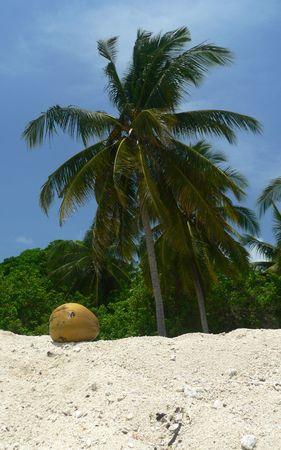 Coral Beach Sulu Sea SE Asia photo