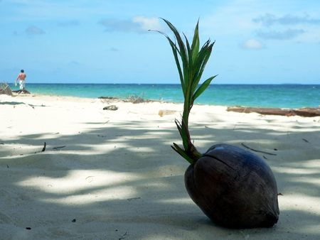 Shaded Coral Beach Coconut SE Asia Stock Photo - 394030