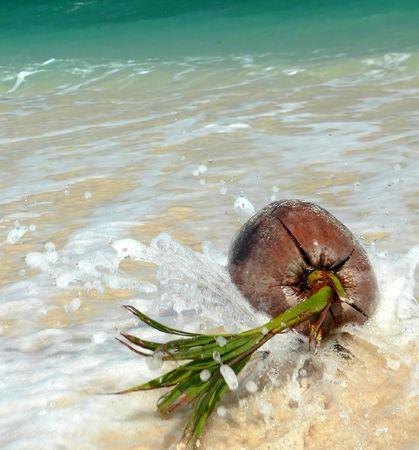 Splashed Coral Beach Coconut SE Asia photo