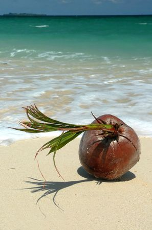 Coral Beached Coconut SE Asia Stock Photo - 394022