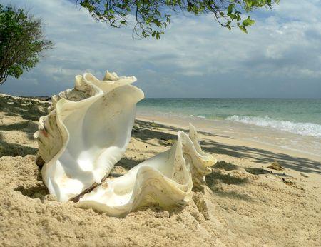 Coral Beach Shell Sulu Sea SE Asia Stock Photo - 394026