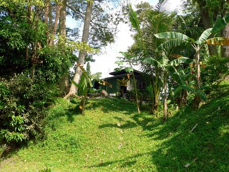 blockh�tte: Borneo. Jungle Hut  Lodge