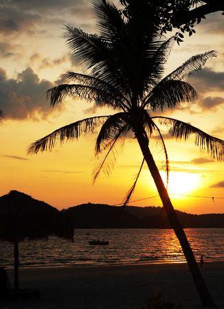 Langkawi Beach. Tilted Palm Tree Sunset photo