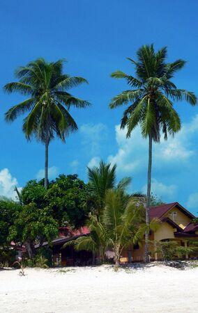 langkawi island: Langkawi Island. Tall Twin Palms Stock Photo