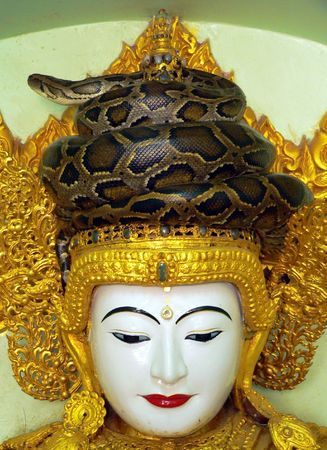 Burma (Myanmar) Revered Boa at Paleik Temple photo